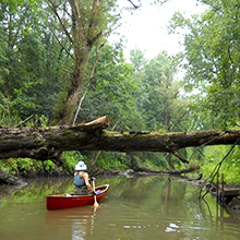 Crooked River Livery girl canoeing by tree